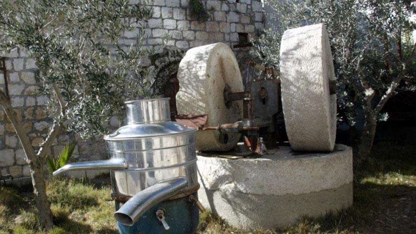 น้ำมันมะกอก_Pic_Stone_Cold_Press